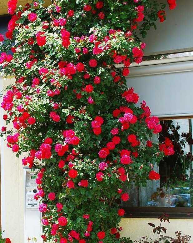raupen an rosen natürlich bekämpfen